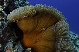 Hap's Reef