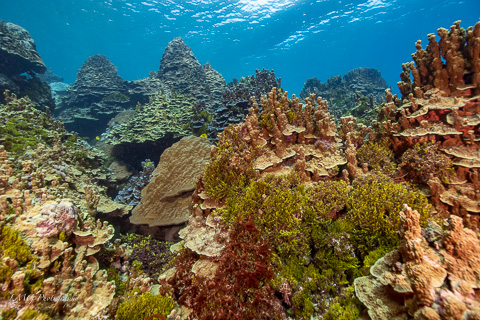 Vecki Reef