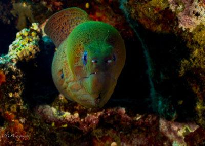 Surprise Reef