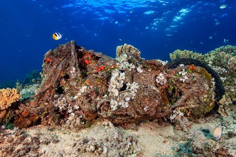 Harley Reef