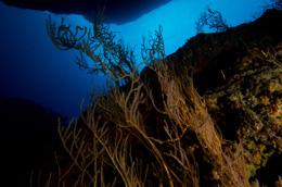 Black Coral Kingdom