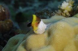Finger Reef