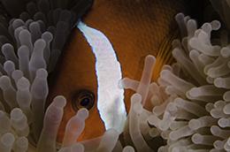 Hourglass Reef