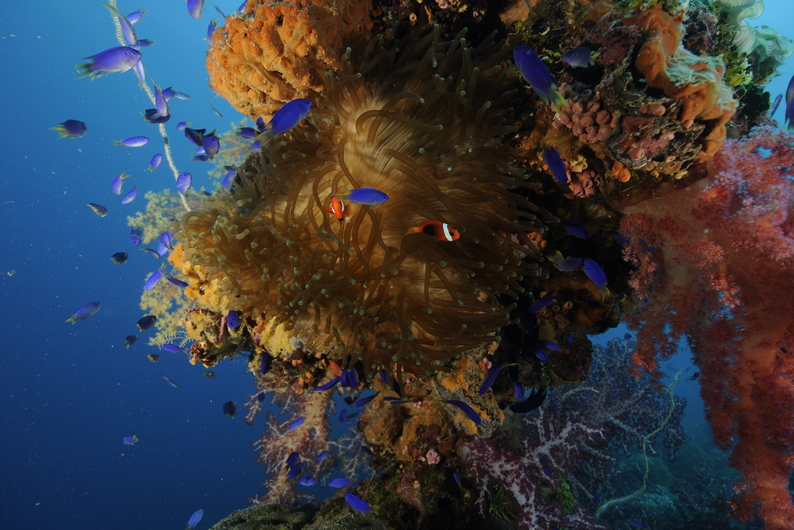 Chuuk Soft Coral-7s