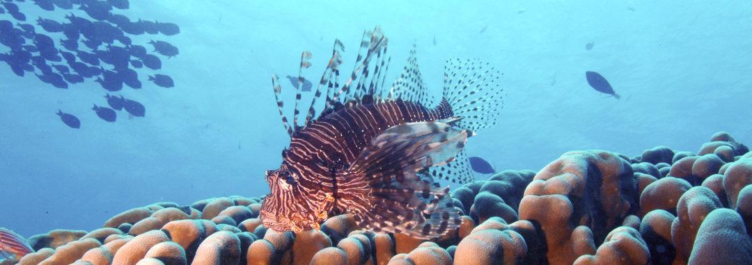 Free Guam Shore Dives