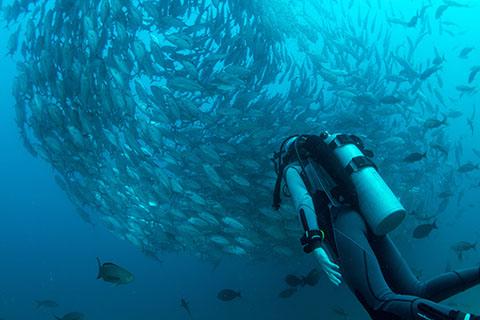 Palau Spawning Trips