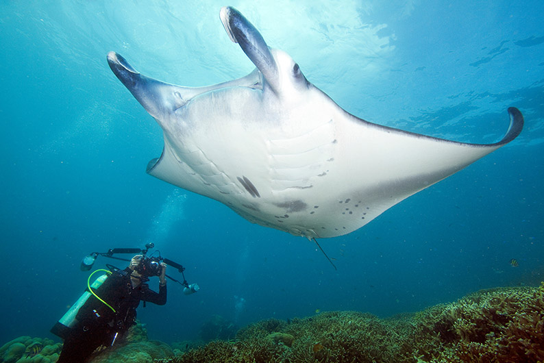 Yap manta and photographer at Mil Channel