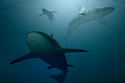 Palau Shark Week