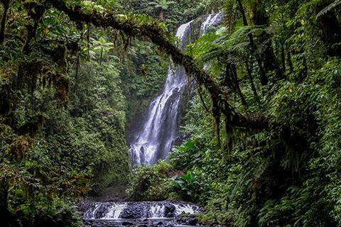 pohnpei 6 waterfall hike 480