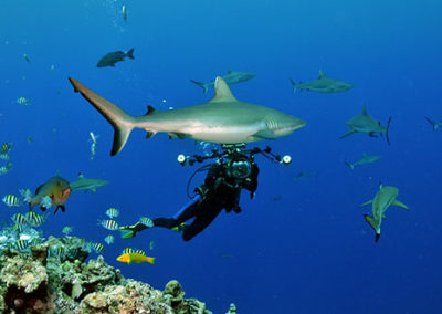 Yap Divers 4 Sharks