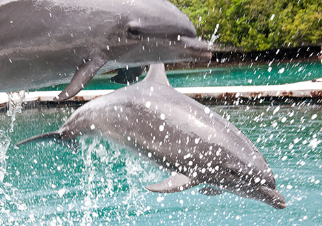 dolphins20-(2)
